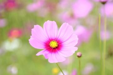 the white pink flower in the garden