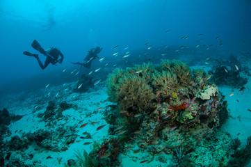 Diver, coral fish in Gili Lombok Nusa Tenggara Barat underwater