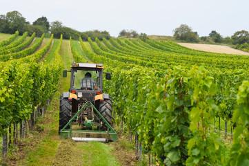 Weinbauer arbeitet mit Traktor im Weingarten