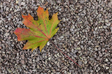 Herbst Blatt