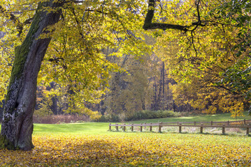 Yellow autumn landscape