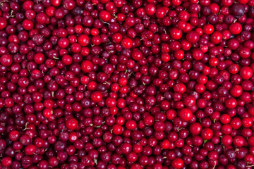 cowberries background
