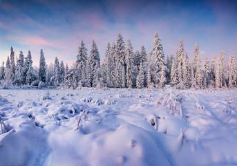 Beautiful winter landscape in the mountain forest. Sunrise