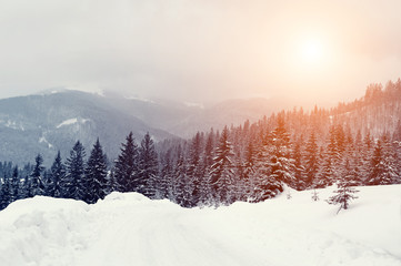 Wall Mural - Winter landscape