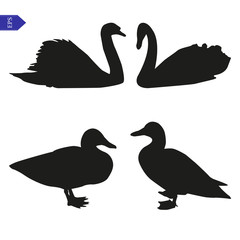 Set of vector silhouettes of birds