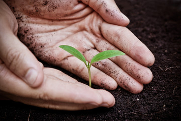 hands holding a young green tree