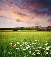 Beautiful meadow landscape