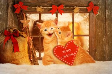 zwei Katzen an Weihnachten wünschen Frohe Weihnachten