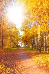 Photo sur Aluminium Automne Under Sun Autumn Park