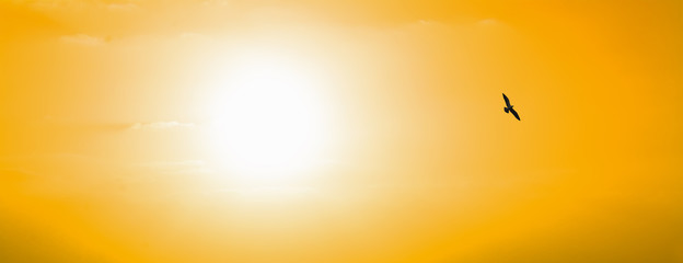 Fotobehang - seagull silhouette at sunset