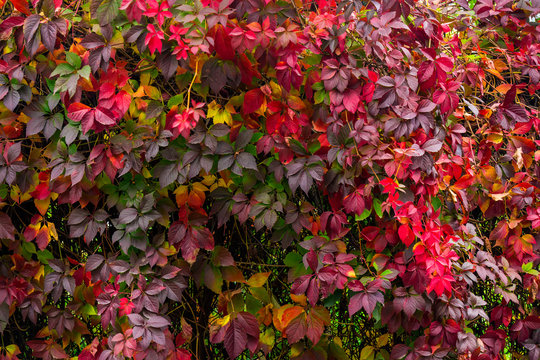 plant with red leaves on a wall
