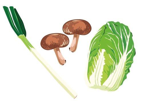 白菜 シイタケ ネギ