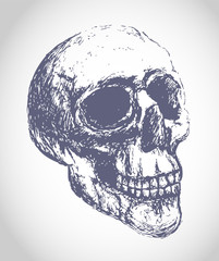 Sketch skull illustration