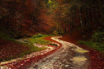 Picturesque trail in the forest during autumn