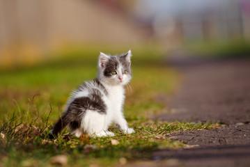 adorable little kitten outdoors
