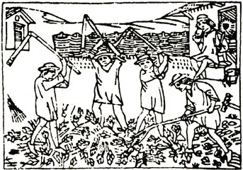 "Medieval draving ""Threshing with flails"""