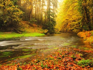 Stony bank of autumn mountain river covered by beech leaves