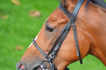 cheval de course