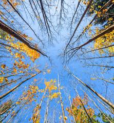 Letzte Blätter an den Bäumen im Herbst