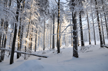 Beautiful forest in snow on sunny day