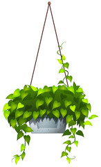 A hanging plant