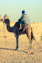 Beduins leading tourists on camels at short tourist tour around