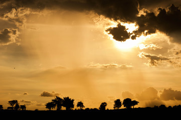 Beautiful sunset over the savannah