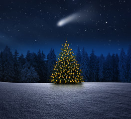 Wall Mural - Weihnachtbaum im Winterwald