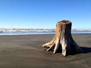 Tree Left on Beach