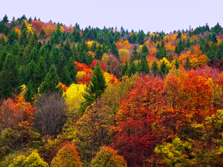 Autumn Fall Forest Trees Landscape