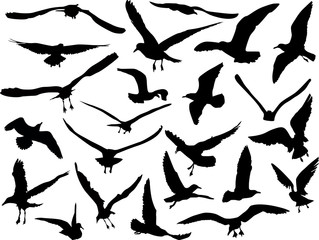 twenty three gulls collection on white background
