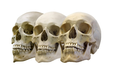 group of three human skulls
