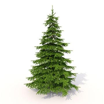 Spruce on white