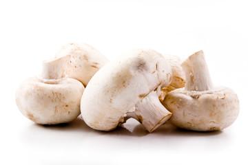 Keuken foto achterwand Baobab mushrooms