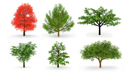 Set of six trees isolated on white