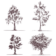 Set of four sketches trees