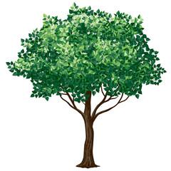 Foliage tree