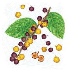 dye fig fruit