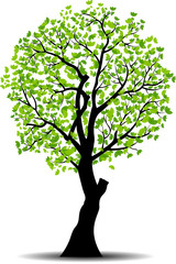 spring tree silhouette vector