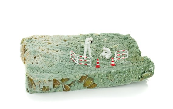 Miniature health inspectors scientists on a slice of moldy bread