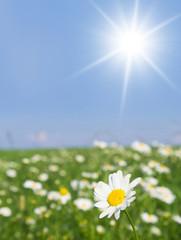 Flowers Blooming Field Sunlit