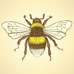 Sketch bumble bee in vintage style