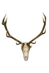 big deer stag trophy