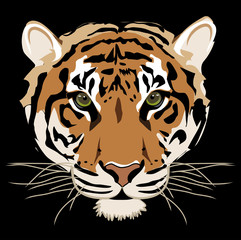 Tiger isolated on black background vector
