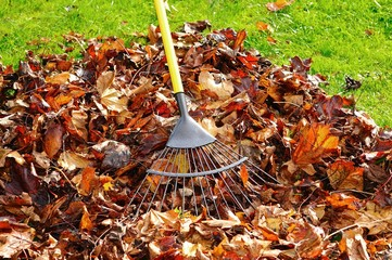 Raking Autumn Leaves © Arena Photo UK