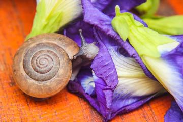 Snail eating purple flower