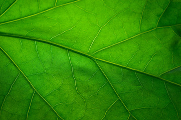 La pose en embrasure Macro photographie Green leaf