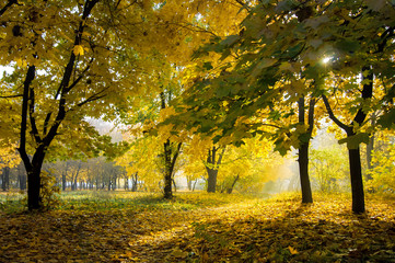 colorful autumn landscape with yellow trees and sun, natural bac