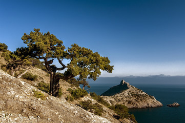 summer landscape wiyh tree, sea and  mountain, natural backgroun