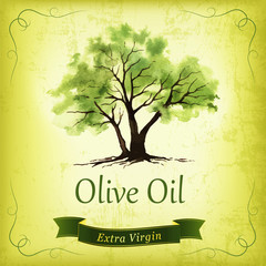 Hand drawn olive tree illustration with watercolor.